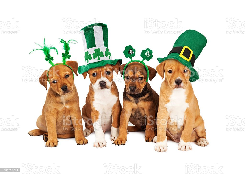 Large St Patricks Day Dog stock photo