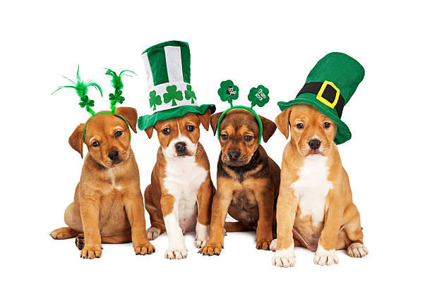 large st patricks day dog - st patricks day stock photos and pictures