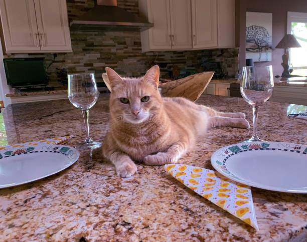 Large Tabby Cat Sitting at a Table Setting, Waiting; Funny Animals stock photo