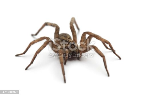 Spider isolated on white.