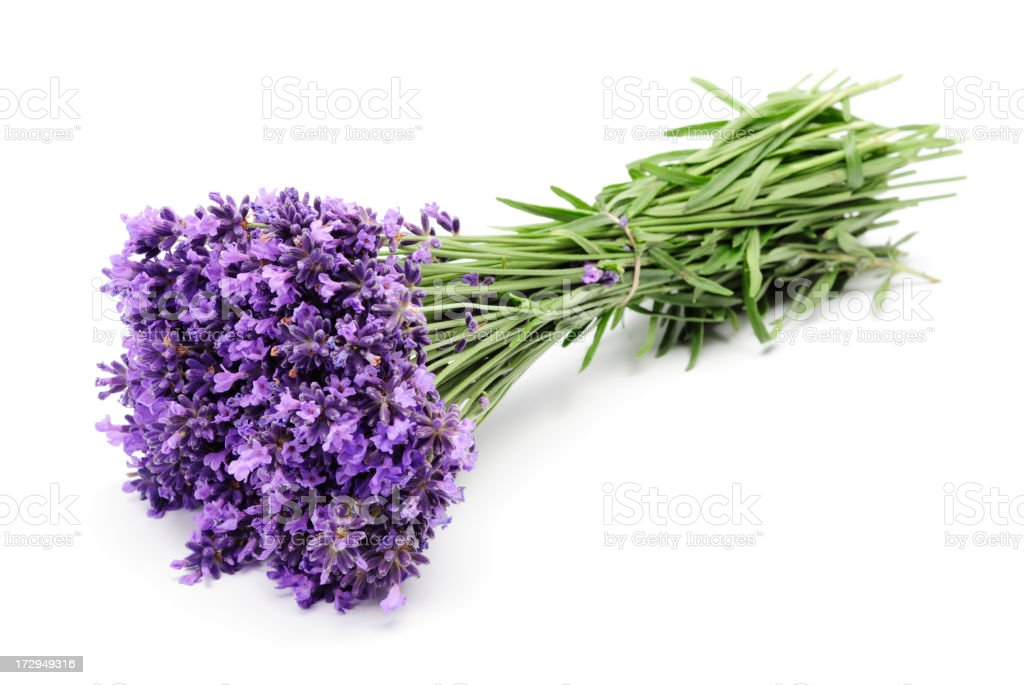 Large tied bunch of purple lavender stock photo