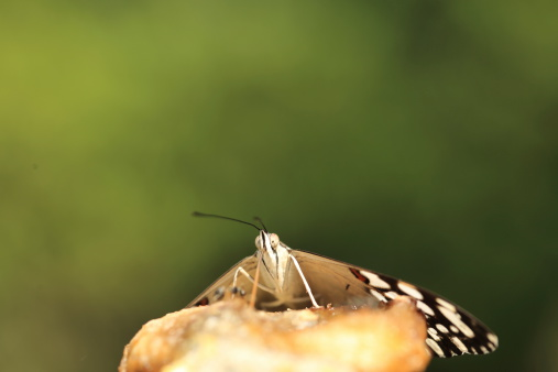 Macro shot of a butterfly in what seems to be eating a fruit with a very large tonge