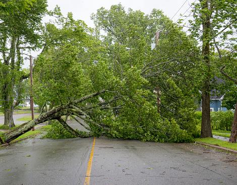 Large Tree Fallen Across Road