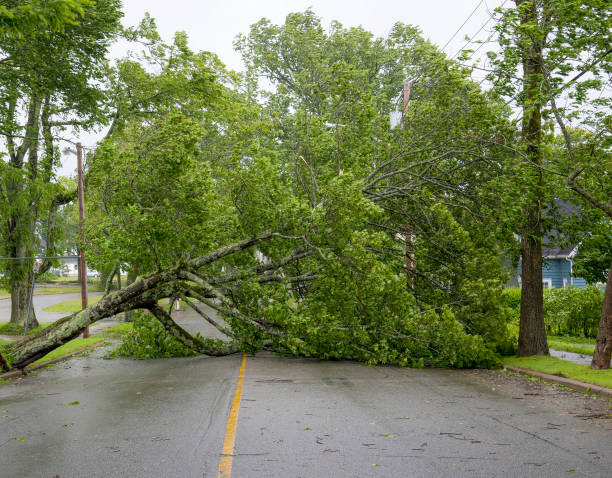 Large Tree Fallen Across Road Large tree fallen across a wet road. The road is completely blocked. Leaves still on tree. Overcast sky above. Other trees still standing. fallen tree stock pictures, royalty-free photos & images