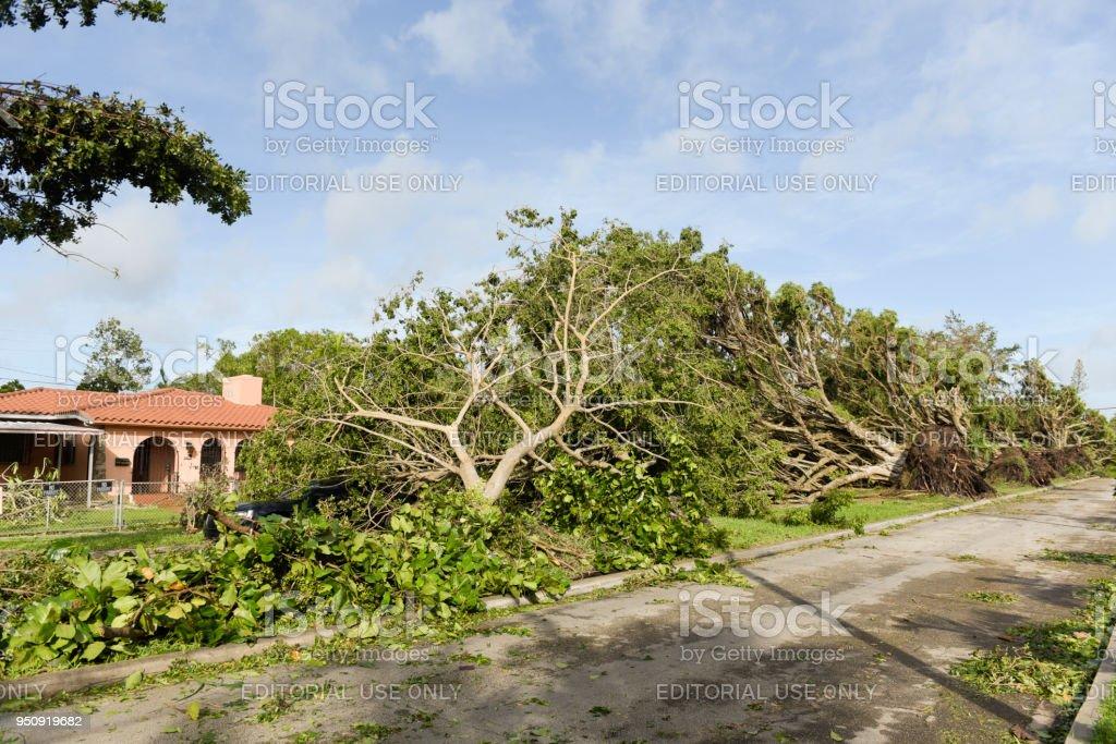 Großer Baum gefallen auf Eigentum – Foto