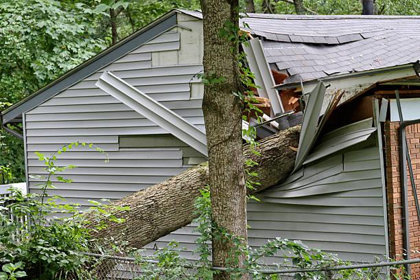 Großer Baum Falls auf einer kleinen Haus – Foto