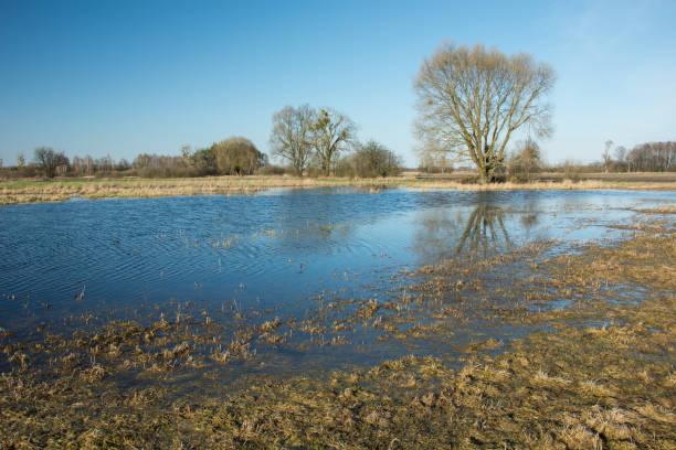 A large tree in the water on a flooded meadow after rain stock photo