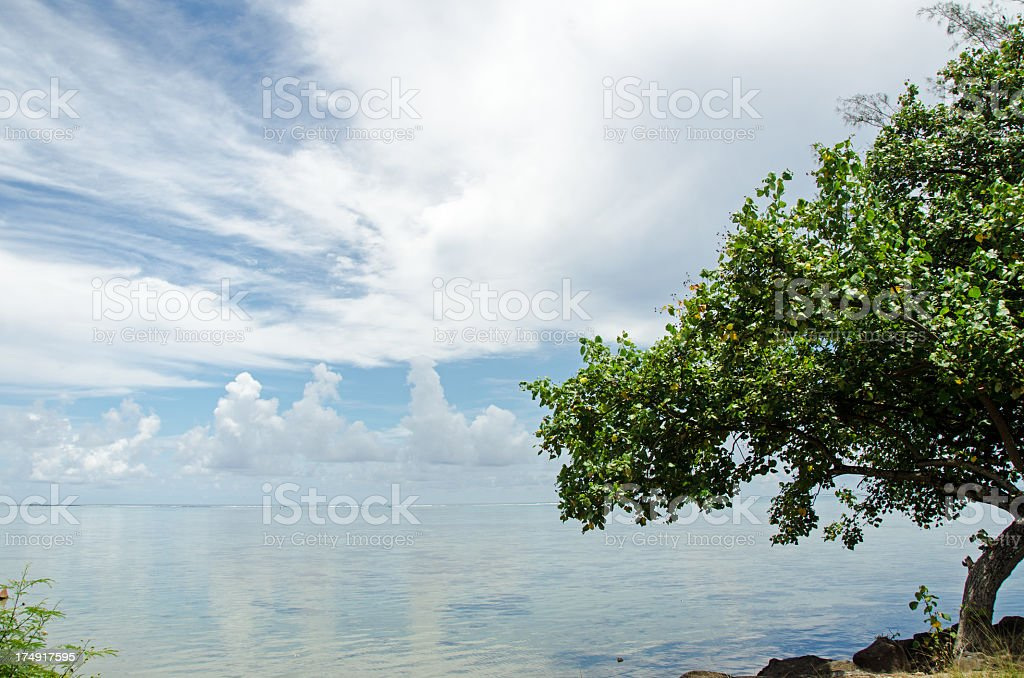 Large tree on beautiful lagoon under a cloudy sky. royalty-free stock photo