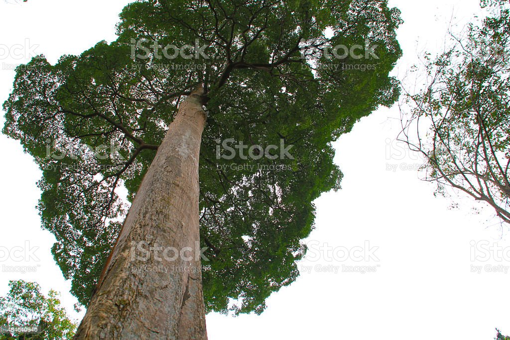 Large Tree stock photo