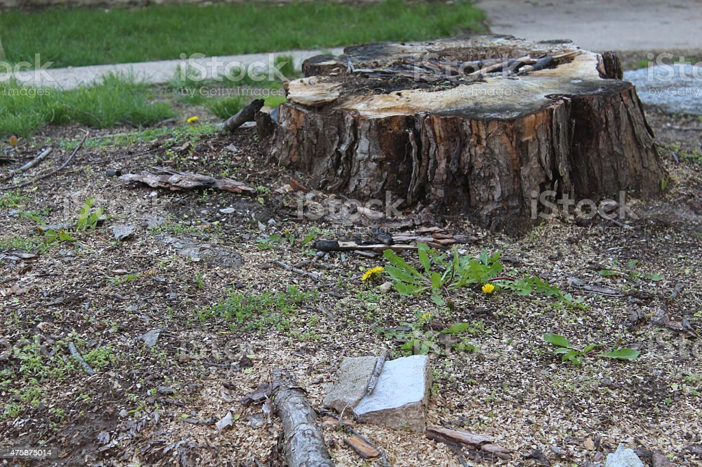 Large Tree stump stock photo