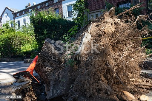 istock Large Tree Stump with Roots being Removed and Blocking a Neighborhood Sidewalk in Astoria Queens New York 1282064205