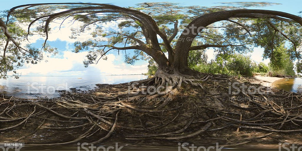 Large tree with roots stock photo