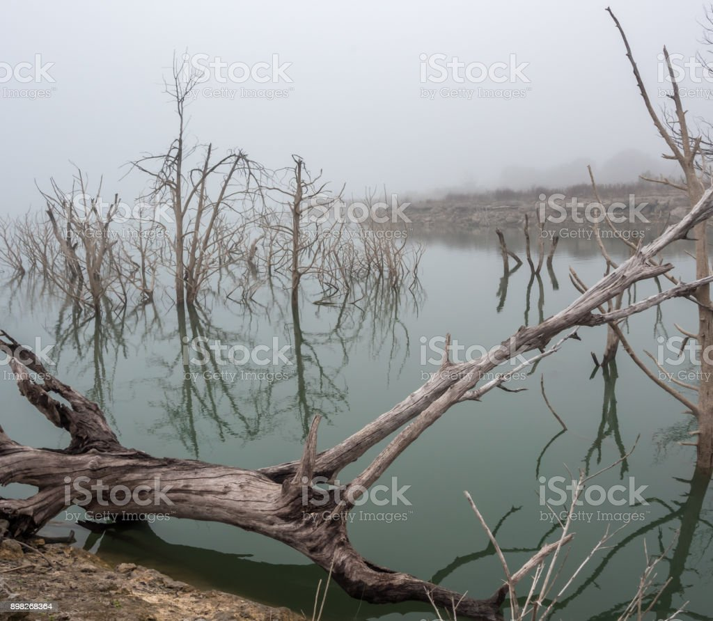 Large Trunk In Large Lake with White Trees in the Background in the Fog stock photo
