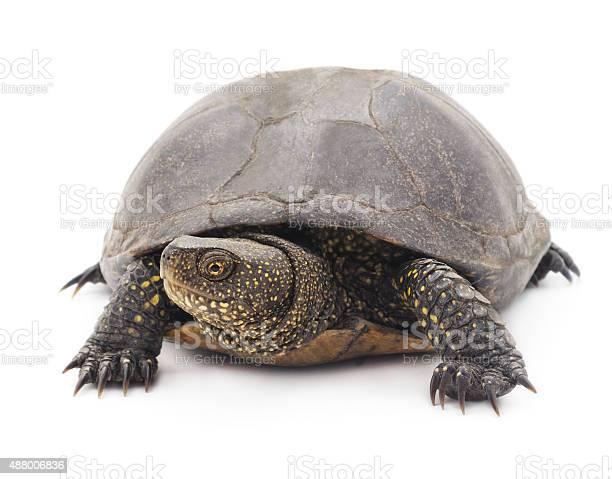 Large turtle picture id488006836?b=1&k=6&m=488006836&s=612x612&h=limblnl4p zaj2h7etrg2jrnt8rsledbvhvyvzybq30=