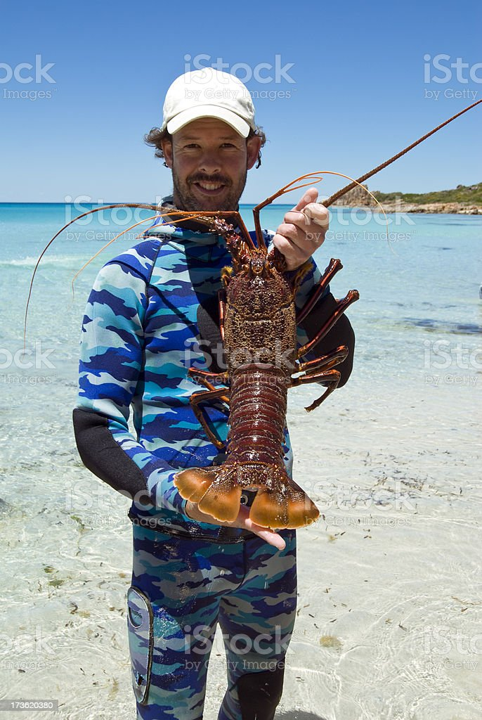 Large Western Rock Lobster (Crayfish) stock photo