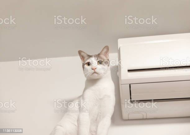Large white cat sitting with air conditioner picture id1135113008?b=1&k=6&m=1135113008&s=612x612&h=yw at qzit7kacxsniuewm 5exixjfzoa xn1tv57ek=
