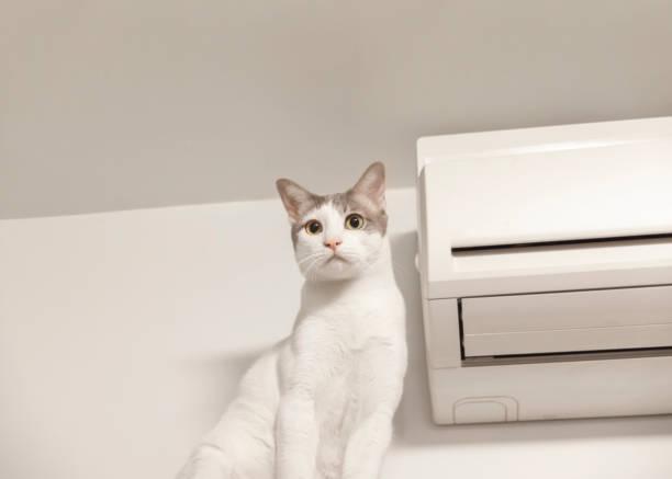 große weiße katze mit klimaanlage - suche katze stock-fotos und bilder