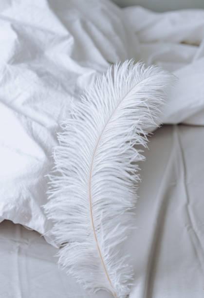 large white feather on the bed. - pena de pássaro algodão imagens e fotografias de stock