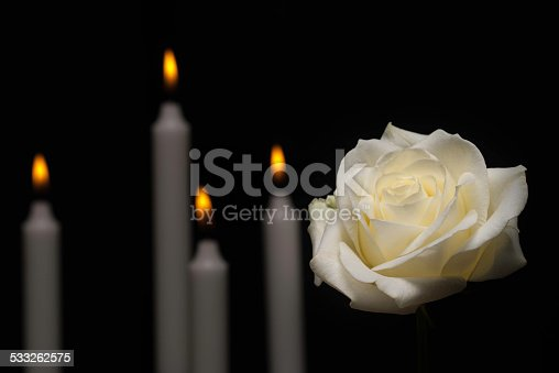 White rose in front of candles on black background.