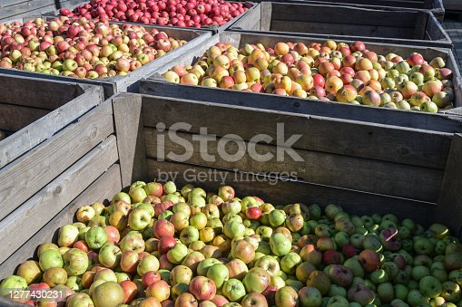 Large wooden boxes with different kinds of organic apples after the harvest in a cider factory, selected focus, narrow depth of field