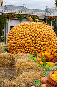 A large yellow pumpkin consisting of small squash and pumpkin fruits. Decorations for Thanksgiving and harvest festival, autumn in the city, hay vegetables stalls with gifts