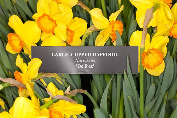 Nombres De Flores Amarillas Banco De Fotos E Imagenes De Stock