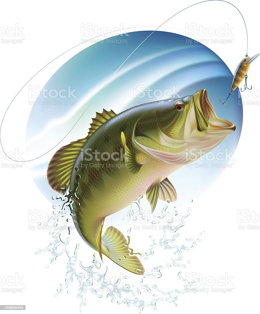 Largemouth bass catching a bite stock photo