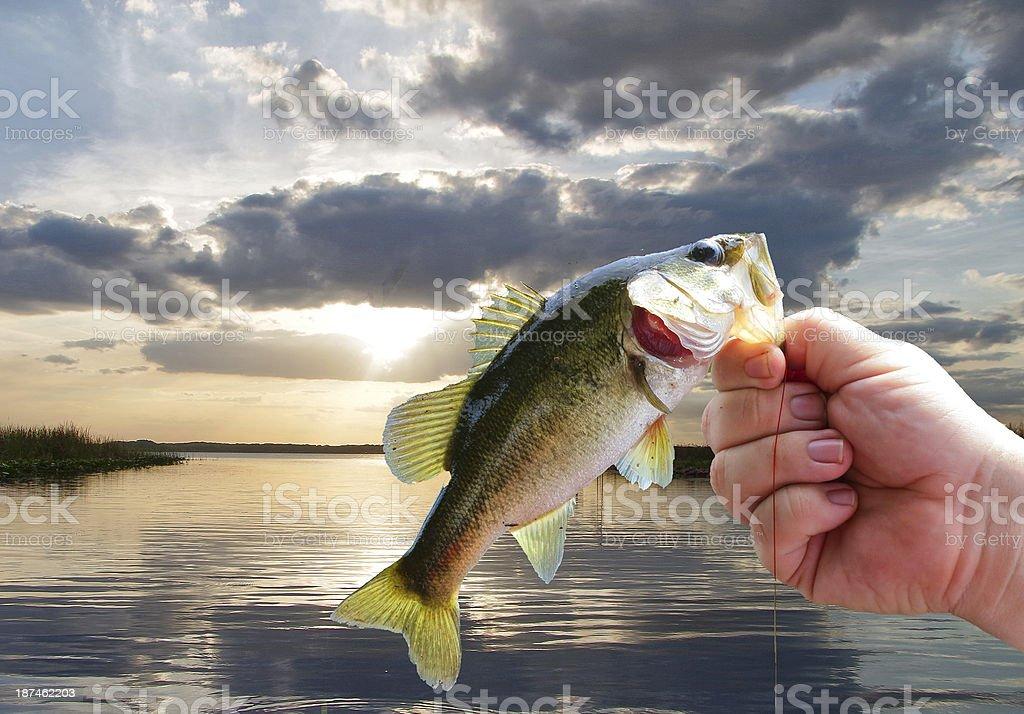 Largemouth Bass fishing stock photo