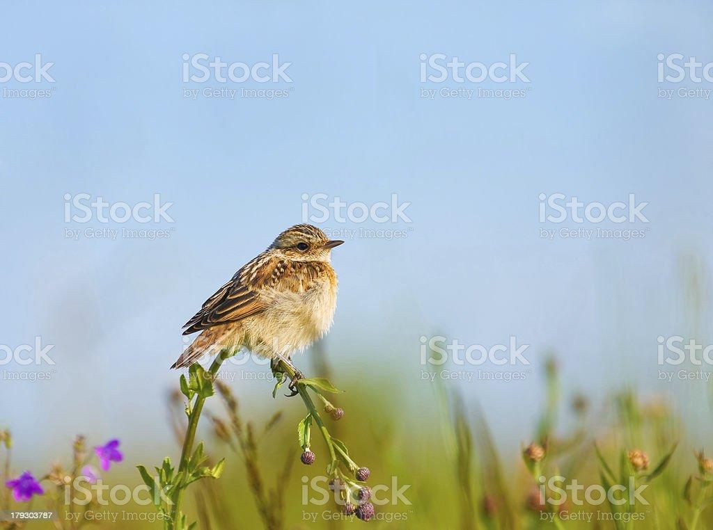 lark on a flower stock photo