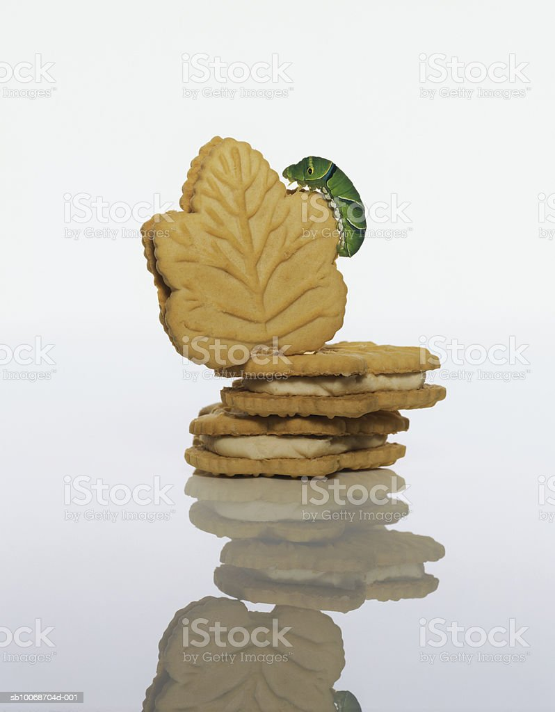Larva on cookie royalty-free stock photo