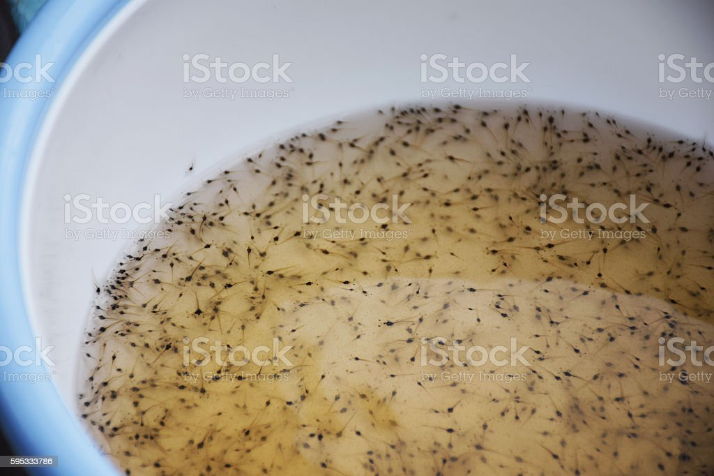 Larval shrimp and Aquaculture animals business. stock photo