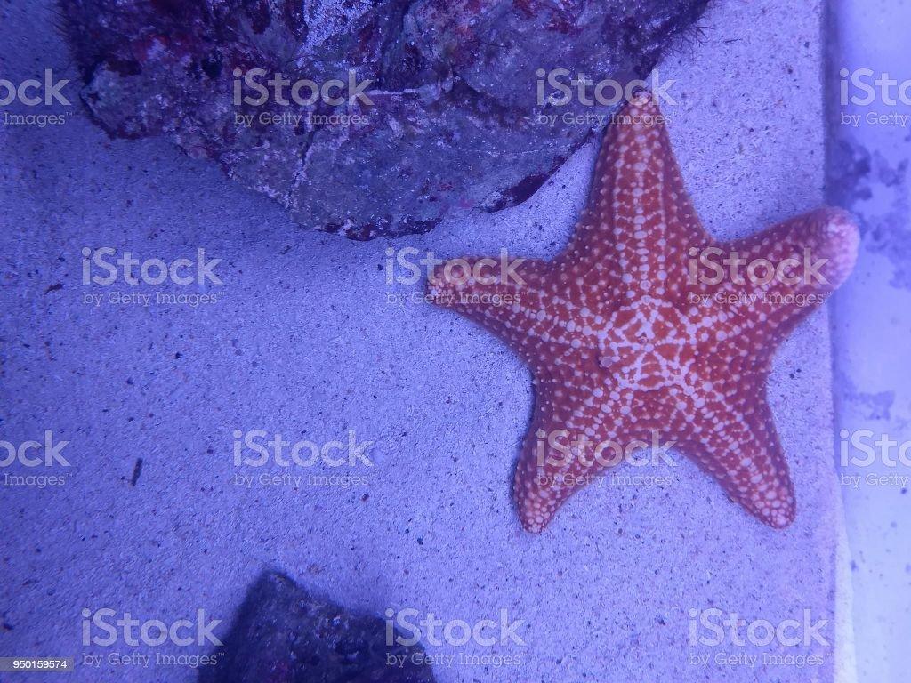 Las estrellas dicen que los fugaces somos nosotros stock photo