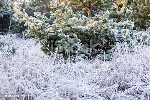 Las zimową porą roku w Polsce