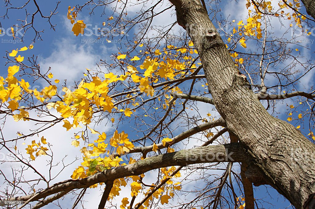 last fall foliage royalty free stockfoto