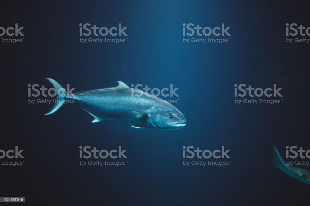 Last in group stock photo