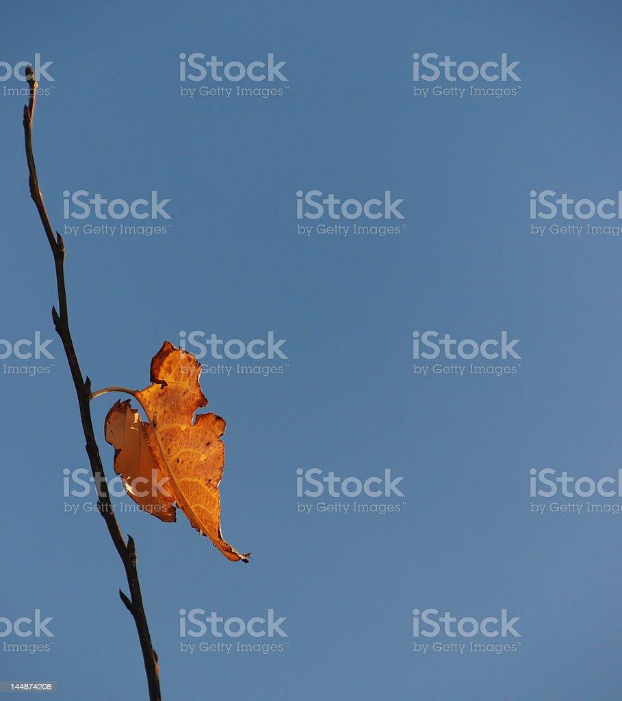 Last Leaf royalty-free stock photo