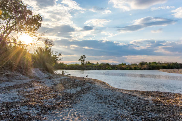 Last rays of the sun on the beach of Argeles sur Mer, Occitanie, France riverbank stock pictures, royalty-free photos & images