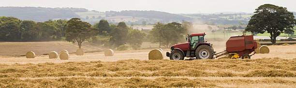 Last Straw (farming, agriculture, harvest) stock photo