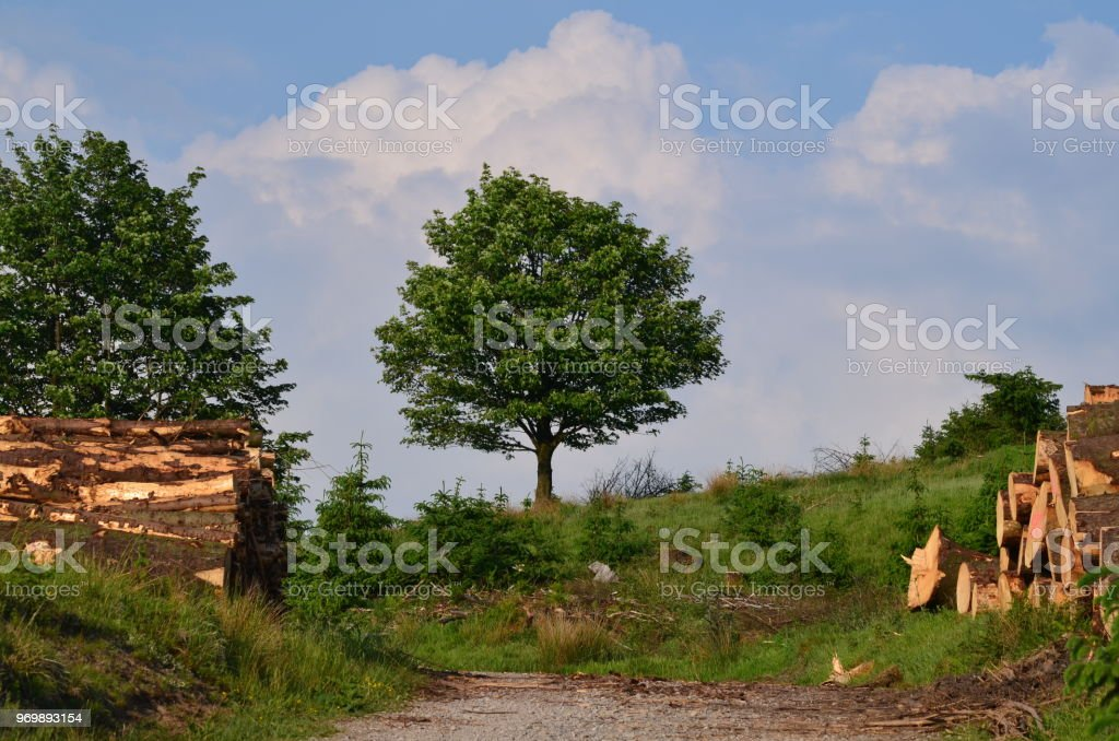 Last tree Standing - Deforestation stock photo