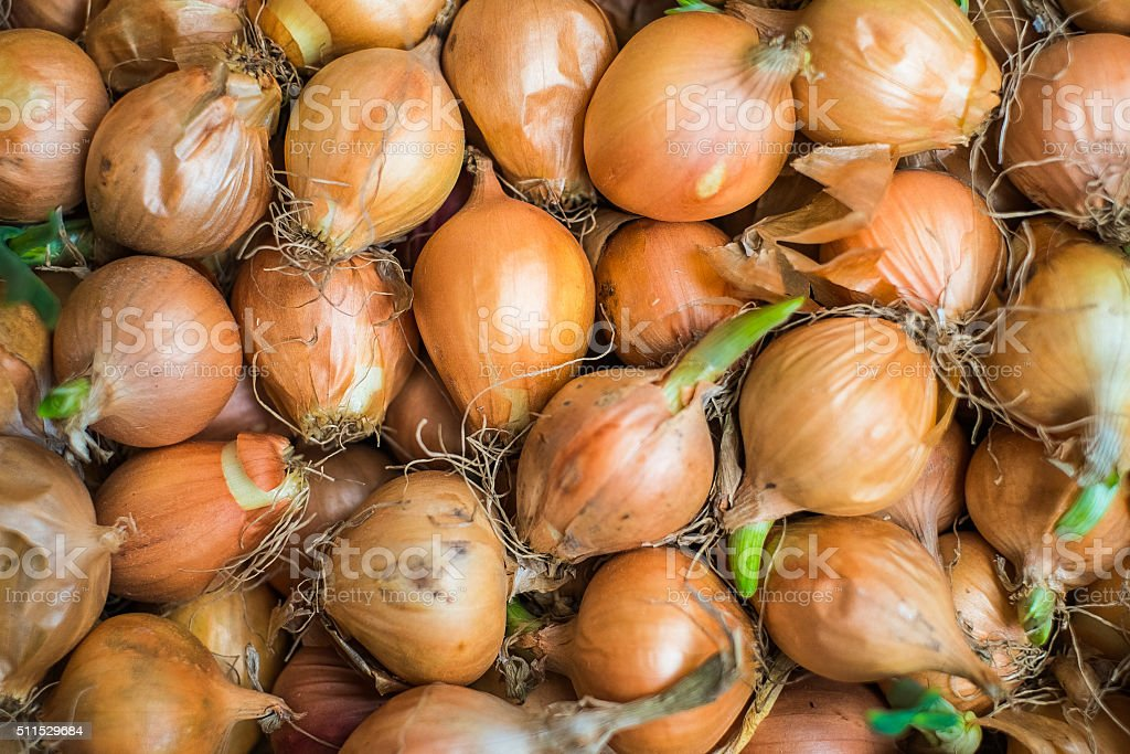 Last year harvest of onion after 6 months storing stock photo