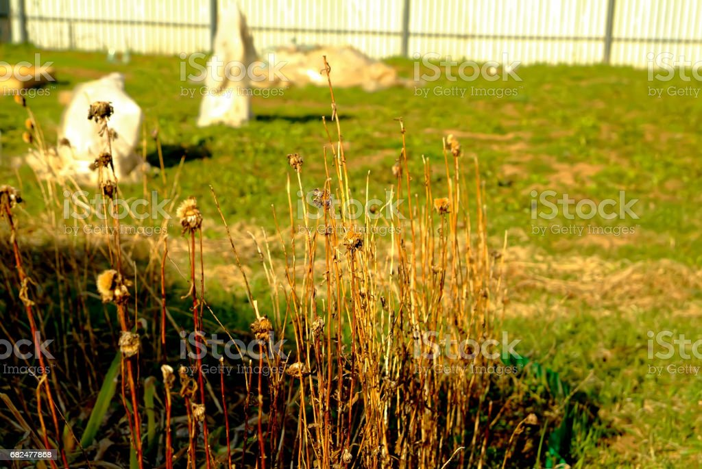 Last year's Grass in the garden foto de stock royalty-free