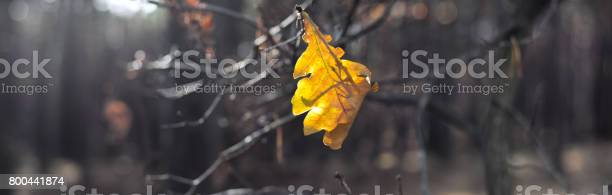 Last yellow leaf in dark autumn forest autumn landscape banner picture id800441874?b=1&k=6&m=800441874&s=612x612&h=v7p2ds9hz9sztf13upybnhq01a7j8hdwn593qqcbnz8=