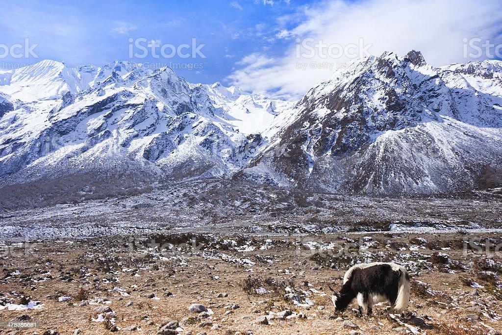 Latang National Park,Nepal stock photo