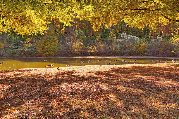 Late afternoon Autumn Sunshine at the Lake stock photo