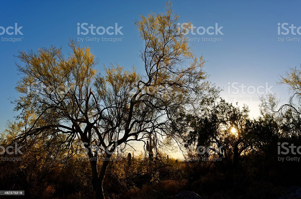 Late afternoon colorful desert silhouette in Spring stock photo