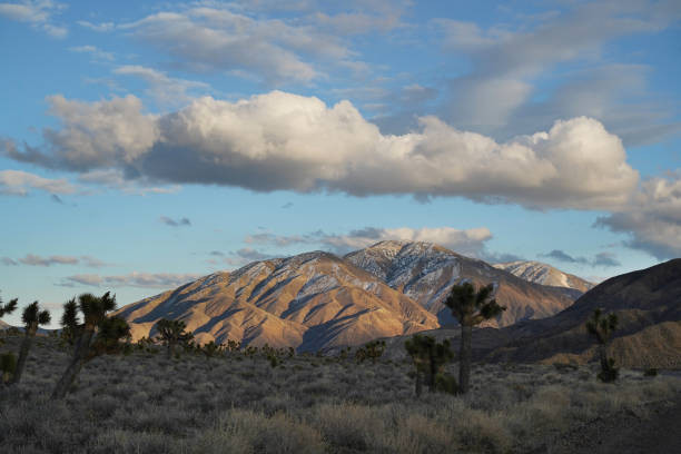 Late Afternoon Desert Landscape stock photo
