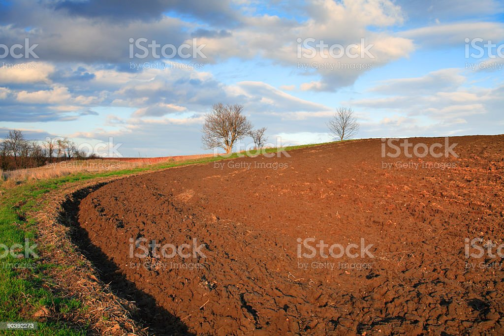 Late Afternoon Fields III royalty-free stock photo