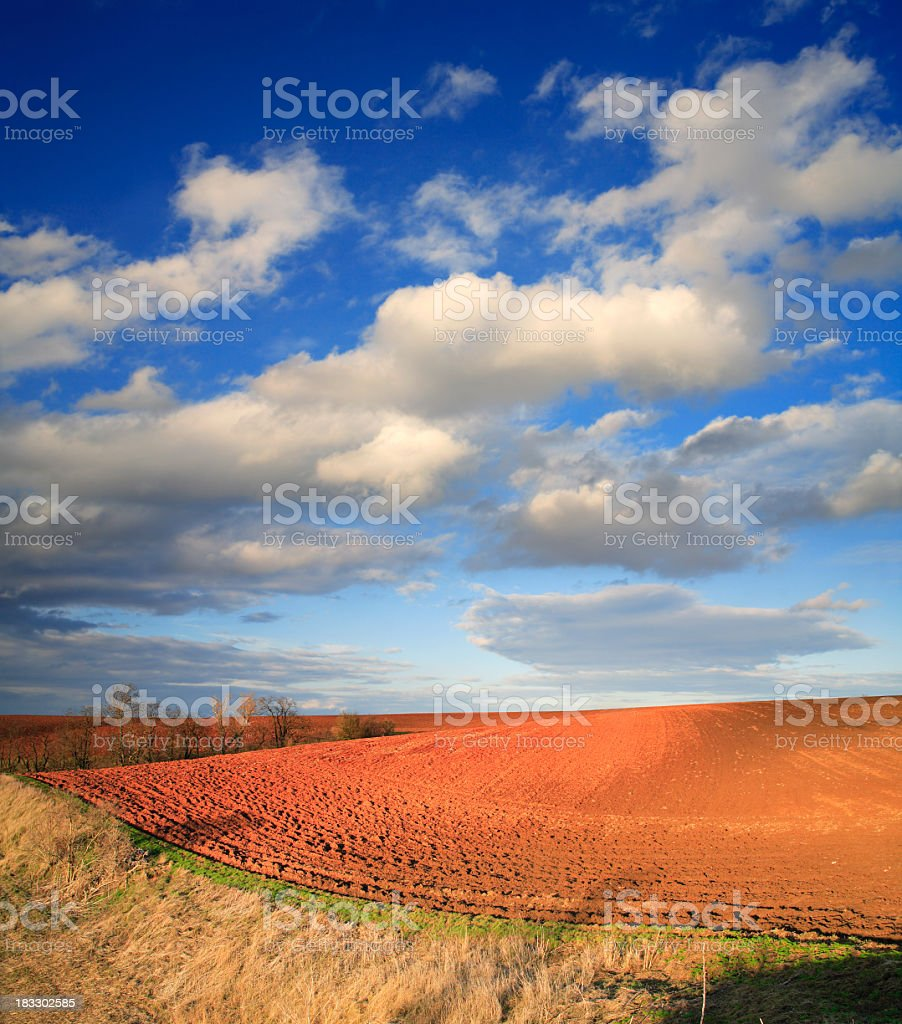 Late Afternoon Fields royalty-free stock photo