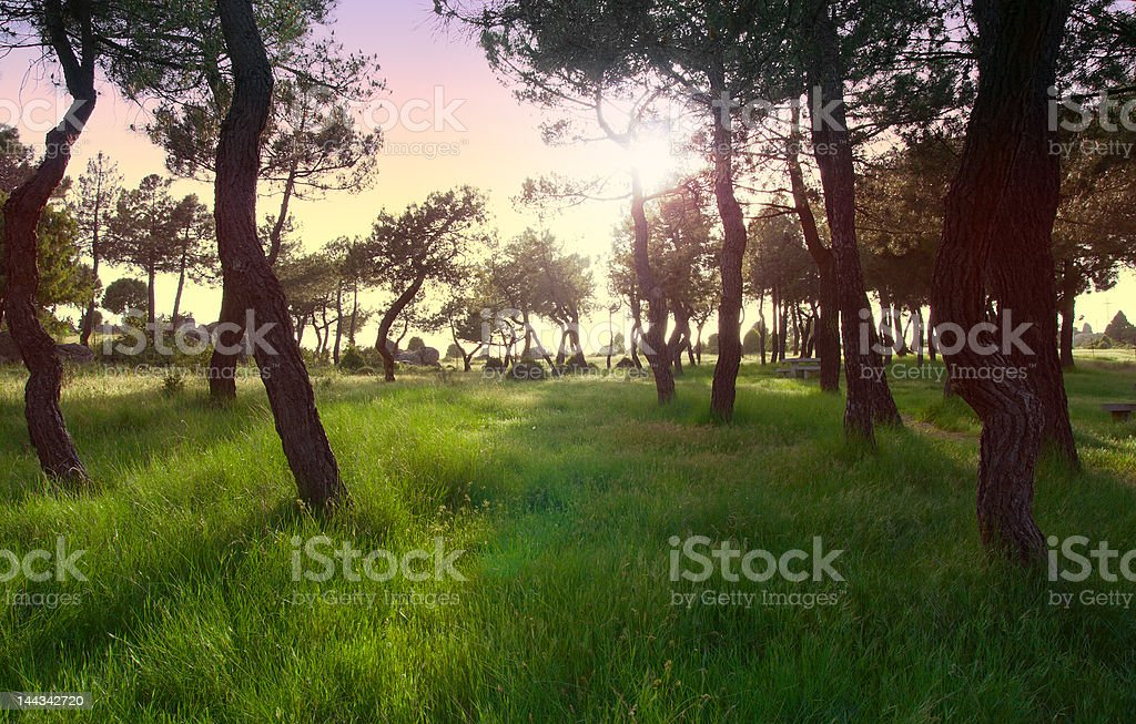 Late afternoon in an enchanted wood stock photo