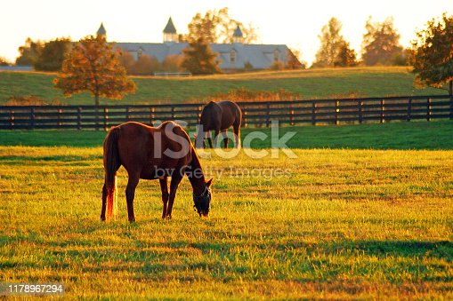 The sun sets on Horse Country in the Blue Grass Region of Kentucky